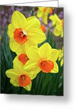 First Arrivals Of Spring Greeting Card