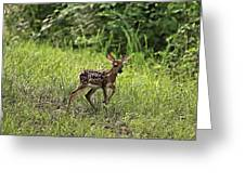 First Baby Fawn Of The Year Greeting Card
