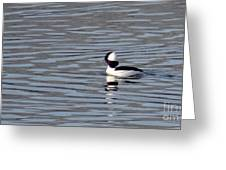 First Day Of Spring Bufflehead2 Greeting Card