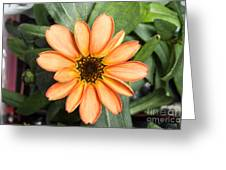 First Flower Grown Aboard Iss Greeting Card
