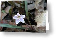 First Flower Of Spring Greeting Card