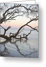 First Light - Hunting Island South Carolina Greeting Card by Bill Swindaman