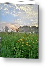 First Light In Glacial Park Greeting Card
