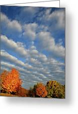 First Light On Glacial Park Sugar Maples Greeting Card