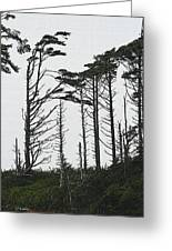 First Line Trees Along The Pacific Ocean Greeting Card