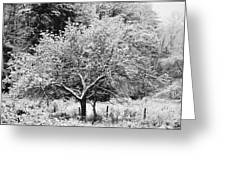 First Snow Greeting Card by Jennifer Compton