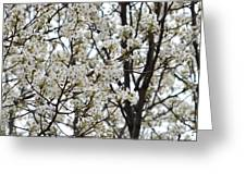 First Spring Blossom Greeting Card