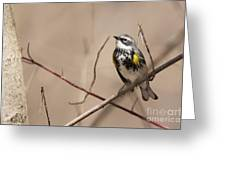 First Warbler Back Yellow Rumped Warbler Greeting Card