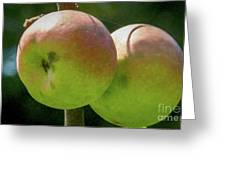 First Year Of Apples 0922pa Greeting Card