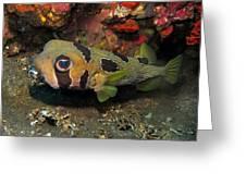 Fish Ball Greeting Card
