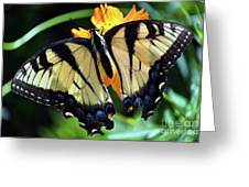 Fish Eye Butterfly Greeting Card