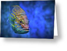 Fish Frown Story Greeting Card