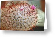 Fish Hook Barrel Cactus Greeting Card