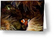 Fish In Sea Anemones Aquarium Greeting Card