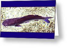 Fish In Water Greeting Card