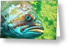 Fish Looking At You Greeting Card