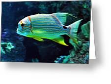 Fish No.3 Greeting Card