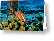 Fish On Coral Greeting Card