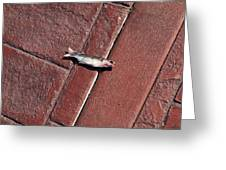 Fish On The Bricks Greeting Card