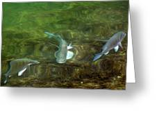 Fish Refractions Greeting Card