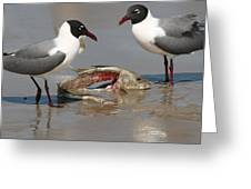 Fish Scraps Stand Off  Greeting Card