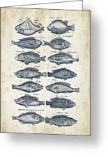 Fish Species Historiae Naturalis 08 - 1657 - 13 Greeting Card