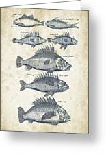 Fish Species Historiae Naturalis 08 - 1657 - 16 Greeting Card