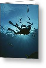 Fish Swim Around A Diver In The Cayman Greeting Card