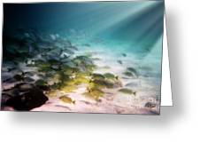 Fish Swim In The Light Greeting Card