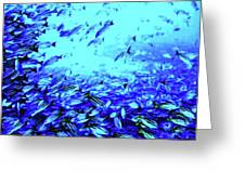 Fish Traffic Greeting Card