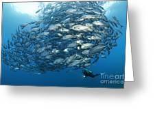 Fish Watch Greeting Card