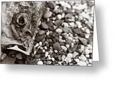 Fishbone 2 Greeting Card