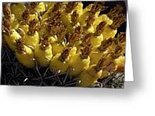 Fishhook Barrel Cactus Fruit Greeting Card