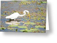 Fishing For Dinner Greeting Card