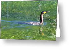 Fishing In The Springs Greeting Card