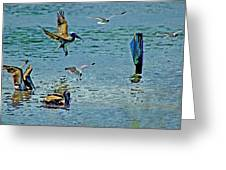 Fishing Pelican And Seagulls Greeting Card