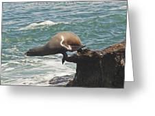 Fishing Sea Lion Greeting Card