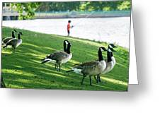 Fishing With The Geese Greeting Card