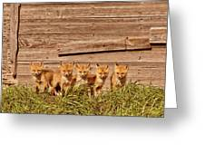 Five Fox Kits By Old Saskatchewan Granary Greeting Card