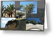 Five Fruit Of Israel Greeting Card