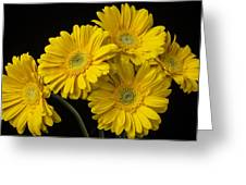 Five Gerbera Daisies Greeting Card