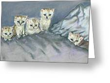 Five Kitties Greeting Card