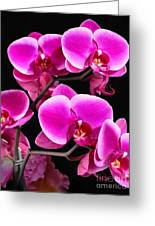 Five Orchids  Greeting Card