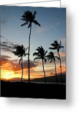 Five Palms Maui Hawaii Greeting Card