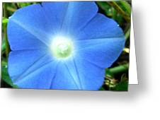 Five Point Star Morning Glory  Greeting Card