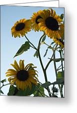 Five Sunflowers To The Sky Greeting Card