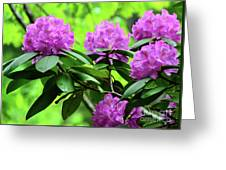 Five Wild Azaleas Blossoms Greeting Card