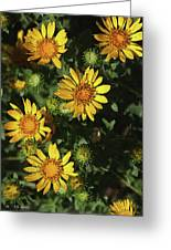 Five Yellow Flowers  Greeting Card