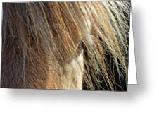 Fjord Forelock Greeting Card by Dressage Design