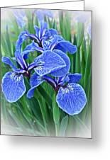 Flag Iris Blues Greeting Card
